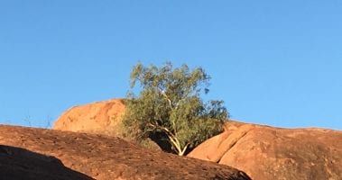 Help us shape the future of tourism in Central Australia